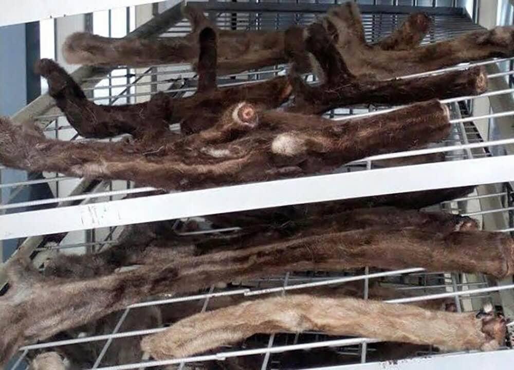 Вакуумный лиофильный шкаф для сушки пантов марала